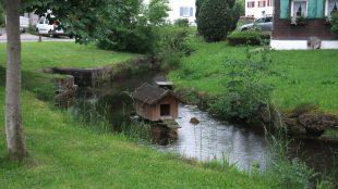 Gartentage_Waal_16-06-04_17