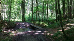 Staffelsee_16-05_26